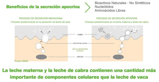 CAPRICARE-secrecion-apocrina