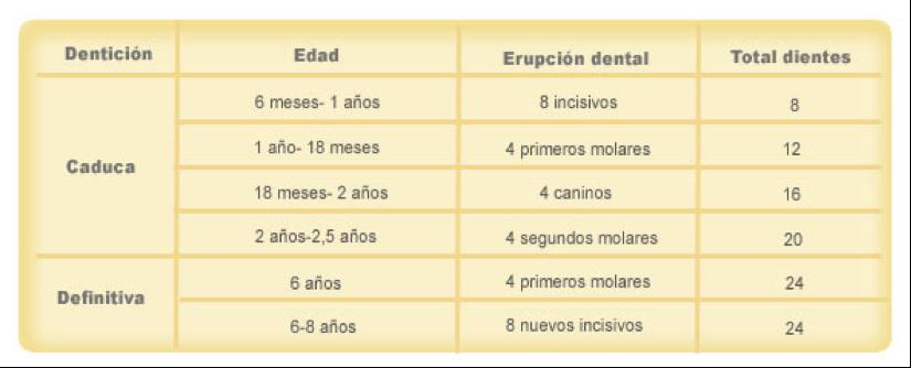 denticion 1