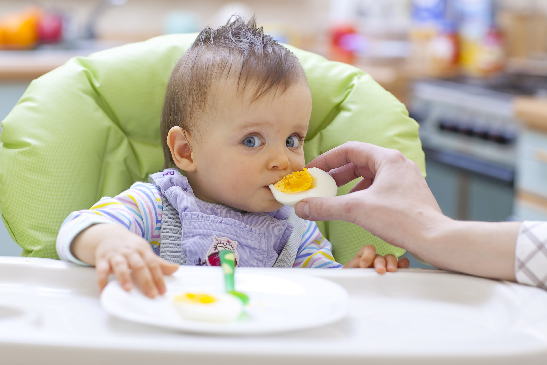 alergias, huevo, bebé, verano