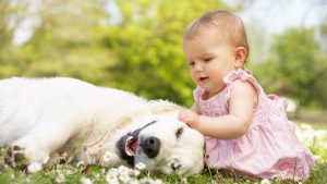 bebé, perro, aire libre, actividades, verano